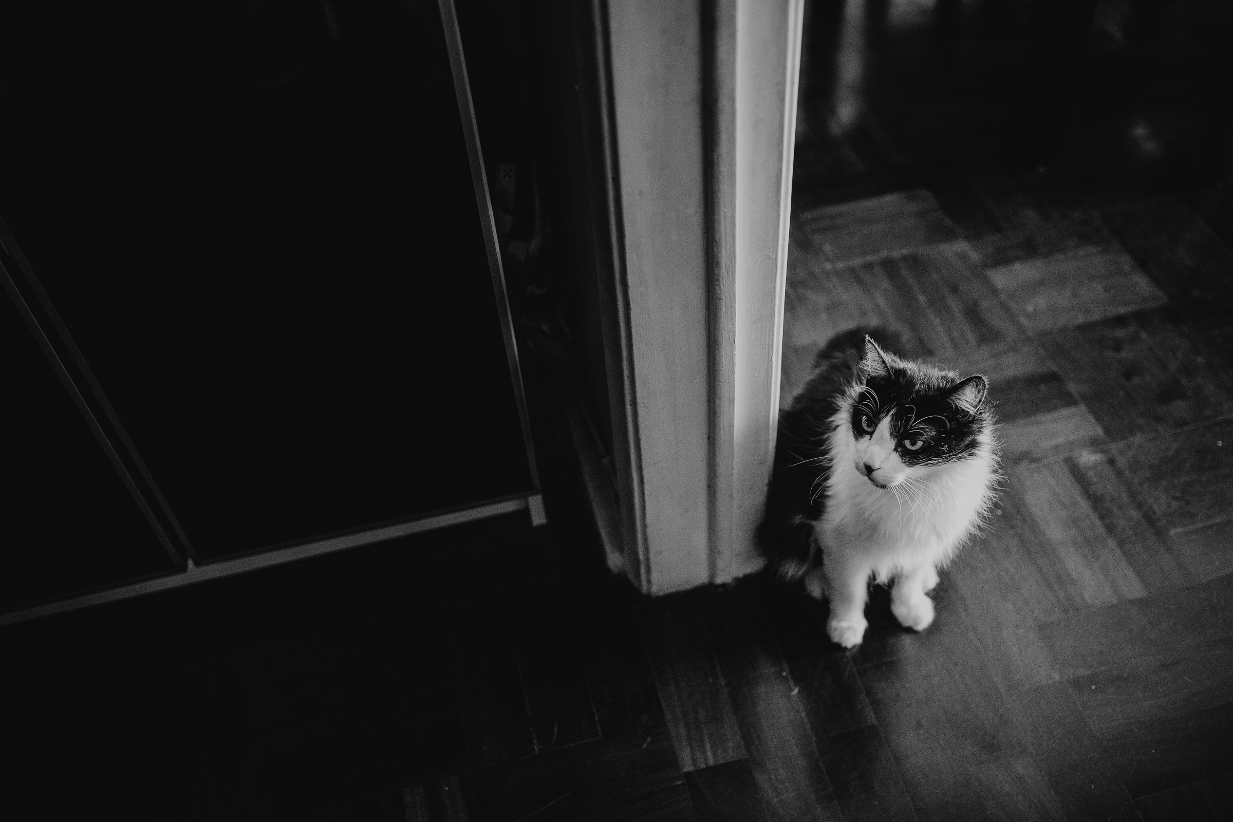 black and white cat waiting for food